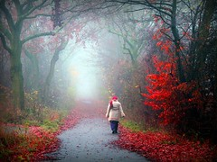 Forest Tales (Mah Nava) Tags: autumn trees light mist nature leaves fog forest germany deutschland licht nebel path herbst natur human wald bltter bume  weg thepath