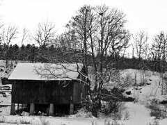 "Abandoned old barn,with a lot of trash under (Vidar ""the Viking"" Ringstad, Norway) Tags: trees winter white snow black cold abandoned norway barn canon eos norge vinter europa norwegen 7d scandinavia akershus sn svart nesodden lve kaldt hvit"