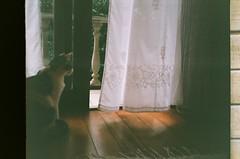 Uma gata que gosta de observar o vento. (GabrielaVS) Tags: cortina cat porta gata quarto cho maryjane vento marrom sacada canonprimabf800