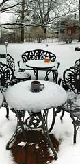 MorningCup (Grudnick) Tags: morning schnee winter dog snow tree coffee yard germany deutschland kaffee maryland hund mug morgen garten baum baretrees hagerstown becher wessel morningcup morgendlichetasse