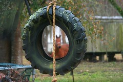 Curious Horse (juliealicea1947) Tags: horse louisiana tire rope swing hearingimpaired pavedroad
