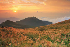Light  Sea of clouds (Singer ) Tags: sunset sky mountain clouds canon glow hill taiwan singer  taipei       miscanthus   seaofclouds      silvergrass                awnflower    canon550d  singer186