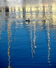 il cormorano (fotomie2009) Tags: italy reflection bird water reflections italia harbour liguria porto riflessi uccello riflesso savona cormorano