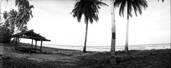 * (-nasruddinmukhtar-) Tags: camera blackandwhite bw panorama tree film beach monochrome analog seaside coconut plum malaysia analogue kelantan convertedtobw horizonkompakt bachok nasruddin nasruddinmuktar efinitisuperuxi200 pantaidamat