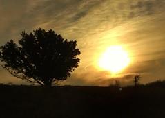 Sun and tree (JonnyGoodchild) Tags: trees sunset sun tree countryside walks view edited country finepix fujifilm processed edit edits countrywalk hs20 viewviews hs20exr fujifilmhs20 fujifilmfinepixhs20