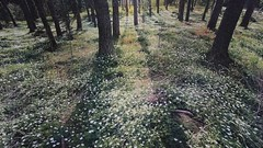 (brianoldham) Tags: flowers trees green beautiful grass forest radio dead cord hope video woods truth desert brian lies religion memories fake pollution lie oldham bushes sparse false convenient deceipt beautifullies brianoldham