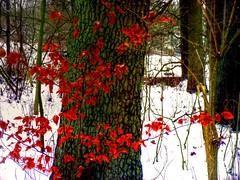 """""""Woodland Bouquet"""" (Galeyo) Tags: me2youphotographylevel1"""