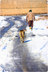 (Reza-ir) Tags: iran animal dog oldman winter snow