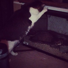 Our kitty attacking the snake cage. / on Instagram http://instagr.am/p/VT1jq1smgG/ (JonZenor) Tags: photos tumblr instagram