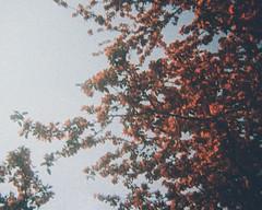 Red (H o l l y.) Tags: lomography 110mm analog kodak trimlite film leaves autumn fall nature landscape sky tree color sunlight retro indie vintage