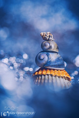 The Watchtower (tycampbe) Tags: ifttt 500px sea color macro beach blue sun light clouds coast ocean tower summer bokeh orange sand surreal magic mood shells atmosphere fantasy fine art balance watchtower seasons seashell magical nature animals colorful flora plants