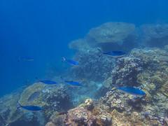 DJIBOUTI (30 of 88) (GregoireDubois) Tags: djibouti nature sea diving wildlife corals