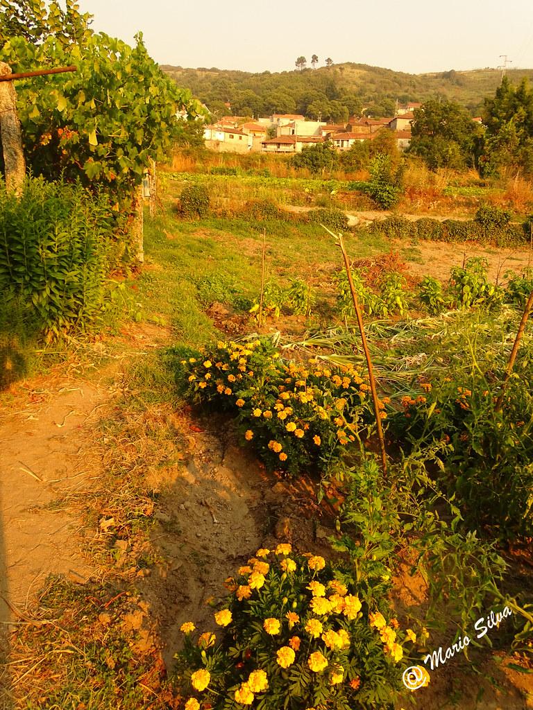 Águas Frias (Chaves) - ... jardim no meio da horta ...
