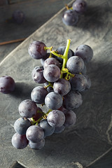 Raw Organic Purple Concord Grapes (brent.hofacker) Tags: agriculture autumn berry blue branch bright bunch cluster concord concordgrape concordgrapes dark delicious food fresh fruit grape grapes grapevine harvest healthy ingredient ingredients juice juicy natural nature nutrition organic plant produce purple purplegrapes raw red ripe seasonal snack sweet tasty vegetarian vine wine winegrapes