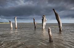 Thornham at high tide (TimHarris) Tags: thornham norfolk hightide posts