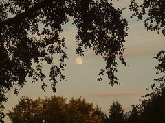 P8169486 (selig2011) Tags: moon goldenhour