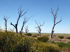 2016-08-17  - Dry Menindee Lake - 4 (Ian Granland) Tags: menindeelake westernnswaustralia menindee