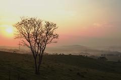 Spring morning- Souzas, SP, Brasil (mara.arantes) Tags: morning landscape mountain tree rural digital flickr nikon d3200 nature naturaleza eco natureza brazil brasil paisagem neblina misty sky plant