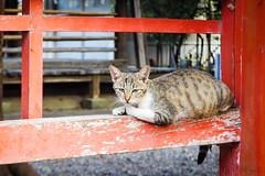 Today's Cat@2016-08-25 (masatsu) Tags: cat catspotting thebiggestgroupwithonlycats pentax mx1