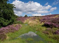 Apres Le Deluge* - Spaunton Moor (Hector Patrick) Tags: flickrelite fujifilmxpro2 fujinonxf1655f28rlmwr lightroom66 northyorkmoors northyorkshire rosedale spauntonmoor twop yorkshire botany britnatparks clouds