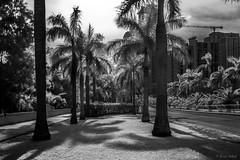 Costa del Este Infrared (Bernai Velarde-Light Seeker) Tags: infrared infrarojo costadeleste panama city central ciudad centro america bernai velarde palms palmas hoya rm72irfilter