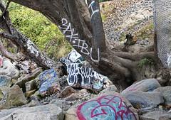 Graffiti'd Nature (sea turtle) Tags: seattle goldengardens park goldengardenspark beach goldengardensbeach northseattle ballard tree trees rock rocks nature graffiti spraypaint