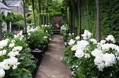 Amberley Open Gardens 2016 (Mark Wordy) Tags: amberley village opengardens whitepeonies peonyrose path urn westsussex