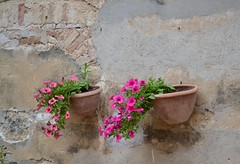 Petunie (monicamalfatti) Tags: flowers fiori petunie details dettagli nature sangimignano toscana italy italia tuscany