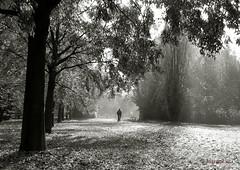 Into The Light ... (MargoLuc) Tags: autumn season walk man alone bike light morning backlight park trees leaves fall shadows moody benches landscape path bw monochrome misty sunlight perspective