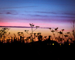 The Major Sleep of Weeds (Kevin STRAGLIATI) Tags: france sunrise cave nature flower sky campaign clouds light
