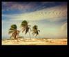 Mangue Seco (My name is John) Tags: sky palmeiras céu palmtree bahia nuvens mangueseco flickrstruereflection1 flickrstruereflection2 flickrstruereflection3 flickrstruereflection4 flickrstruereflection5 flickrstruereflection6 flickrstruereflection7
