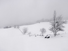 Winter Loneliness (elosoenpersona) Tags: winter cloud snow cold tree nature misty arbol nieve asturias invierno frio elosoenpersona