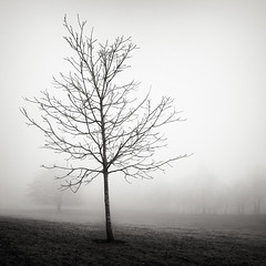 Naked (Andy Brown (mrbuk1)) Tags: winter mist tree nature beauty grass fog square landscape mono blackwhite still mood bright bare branches atmosphere calm devon bark lone deciduous stark simple stripped slope exposed newtonabbot spindly bereft stricken fordepark
