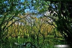 Swamp fun (Chrissy Avila Photography (cHrIsSy1554)) Tags: landscape florida floridawildlife southfloridawildlife ©csquaredphotography chrissy1554 ©christinaavilaphotography ©chrissyavilaphotography wwwchrissyavilaphotographycom
