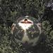2012_Loop_360_Trees_130