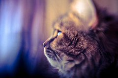 Side Lens Whacking Cat (michaelnugent) Tags: cat canon lens eos 50mm mark ii isabelle l 5d mm 50 ef whacking