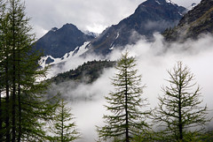 Basso Cielo (Wrinzo) Tags: trees sky italy mountains tree alberi clouds italia nuvole valle val cielo albero abete montagna ayas valdaosta abeti dayas verra piandiverra ghiacciaiograndediverra morenadellaverra