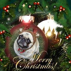 Merry Christmas Bailey