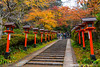 紅獻燈環鞍馬寺 Kurama-dera / Kyoto, Japan (yameme) Tags: travel japan canon eos maple kyoto 京都 日本 kansai 旅行 關西 楓葉 kurama 鞍馬山 kuramadera 鞍馬寺 24105mmlis 5d3 5dmarkiii 紅獻燈