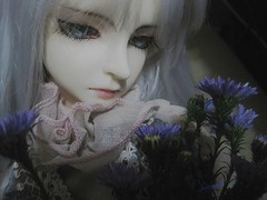 Vampire and little flowers (borometz) Tags: art toy doll vampire bjd   dim 13 ws balljointdoll danbi whiteskin dollinmind  virocana