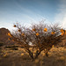 "Nests at Spitzkoppe Namibia • <a style=""font-size:0.8em;"" href=""https://www.flickr.com/photos/21540187@N07/8291666329/"" target=""_blank"">View on Flickr</a>"