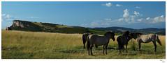 Bourgogne (Marc Ligne) Tags: france sony bourgogne panoramique sonyalpha cheveau