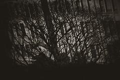 Re(li)quien (rafael.roncato) Tags: life city trees shadow white black monster dark real grey nikon solitude loneliness darkness image thing fear double fluid creation mind hallucination organic unreal paulo requiem universe creature nonsense so representation reliquien delusion exposion d90 sobreposio