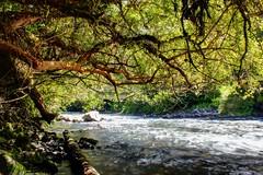 Chanleufu (cjaraf) Tags: chile naturaleza nature river los lagos sp aguas termas osorno puyehue calientes chanleufu