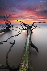 Boom! (Fakrul J) Tags: ocean longexposure trees sunset sky cloud seascape beach clouds canon photography landscapes amazing skies seascapes view dusk shoreline scenic mangrove shore fallen malaysia stick dreamy selangor beautifulsunset banting morib kelanang eos500d pantaikelanang singhrayfilter blogsorothermediawithoutmyexplicitpermissionallrightsreserved leefitlers darylbensonreversegrad fakruljamil wwwfakruljamilcom leeproglass3stop