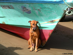 Waiting. (Evan's Studio) Tags: travel vacation dog pet brown beach outdoors photography boat photo ecuador sand colorful  canine evansstudio