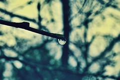 Poetic Justice (Venusian Lady) Tags: trees reflection nature water rain droplets drops woods soft rainyday bokeh branches calm reflect rainy raindrops softtones