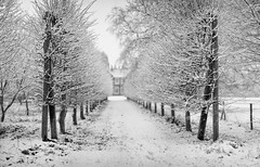 Snowy (Mute*) Tags: winter england bw snow cold monochrome landscape freezing snowfall canonef85mmf18usm dofmontage