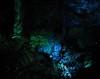 sercet valley1 (GIALIAT) Tags: pink blue red plants white black green water animal yellow gardens night fun botanical lights concert pond bush magic creative january event blacklight wellington local duckpond asb beegees 2013 gialiat pallion lightshop silverfx