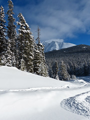 Untouched (annkelliott) Tags: winter snow canada mountains nature forest landscape kananaskis scenery explore alberta rockymountains peaks breathtaking snowcovered kcountry beautyinnature mountainscene interestingness475 nearcanmore highway40smithdorrien explore2013january19
